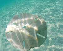 Turks and Caicos Beach cruises, iguana island, conch cruise